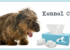 Canine Infectious Tracheobronchitis (Kennel Cough)