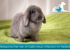 Reducing the risk of Calicivirus infection in Rabbits